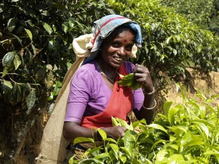 image-srilanka